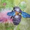 Hmyz na bodláku,akvarel,Valérie T.