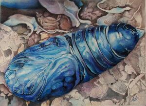 Modrá kukla/blue nymph, 2016, akvarel na ručním papíru, 56x76cm